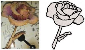 Lena's Rose